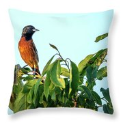Orchard Oriole Songbird Perched On A Bush Throw Pillow