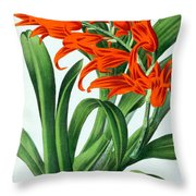 Orchid, Ada Aurantiaca, 1880 Throw Pillow