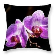 Orchid At Fairchild Gardens Throw Pillow