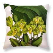 Orchid, Bifrenaria Aurantiaca, 1891 Throw Pillow