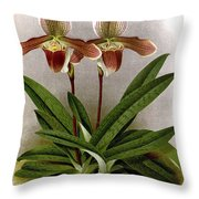 Orchid, C. Ashburtonioe Superbum, 1891 Throw Pillow