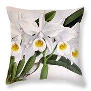 Orchid, C. Eldorado Virginalis, 1891 Throw Pillow