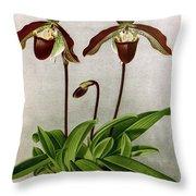 Orchid, C. Oenanthum Superbum, 1891 Throw Pillow