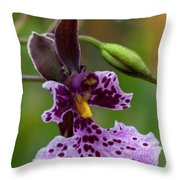 Orchid - Caucaea Rhodosticta Throw Pillow
