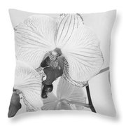 Orchid Delight Throw Pillow