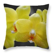Orchid Family Throw Pillow