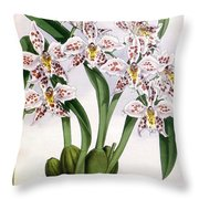 Orchid, O. Alexandrae Plumatum, 1891 Throw Pillow