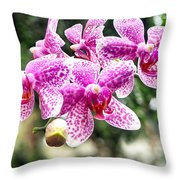 Orchid Phalaenopsis Carnival Bonsall Throw Pillow