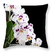 Orchid Phalaenopsis White Flower Throw Pillow