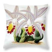Orchid, Pleione Lagenaria, 1880 Throw Pillow