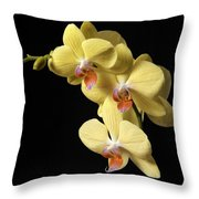Orchid Set Against Black. Throw Pillow