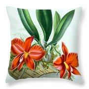 Orchid, Sophronitis Grandiflora, 1880 Throw Pillow