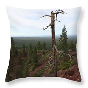 Oregon Landscape - Confused Tree At Lava Butte Throw Pillow