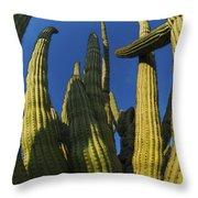 Organ Pipe Cactus Arizona Throw Pillow