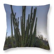 Organ Pipe Cactus At Sunset Throw Pillow