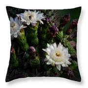 Organ Pipe Cactus Flowers  Throw Pillow