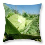 Organic White Cabbage  Throw Pillow
