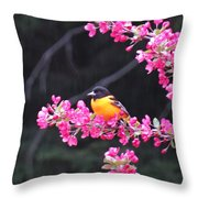Oriole On Crabapple Throw Pillow