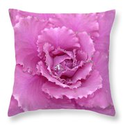 Ornamental Cabbage With Raindrops - Square Throw Pillow