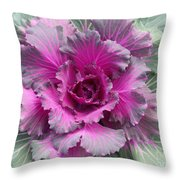Ornamental Red Cabbage Throw Pillow