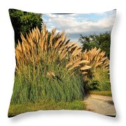 Ornamental White Pampas Grass-1 Throw Pillow