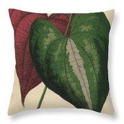 Ornamental Yam  Dioscorea Discolor Throw Pillow