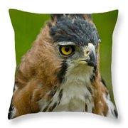 Ornate Hawk Eagle Throw Pillow