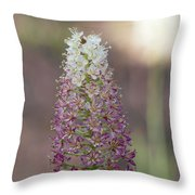 Osceola's Plume #2 Throw Pillow