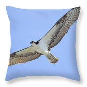 Osprey 1-30-11 Throw Pillow