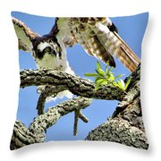 Osprey 4 Throw Pillow