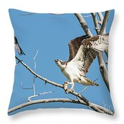 Osprey And Black Billed Magpie Throw Pillow