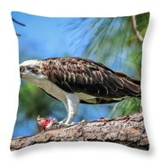 Osprey Breakfast Break Throw Pillow