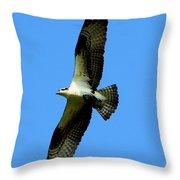 Osprey Carrying A Fish Throw Pillow