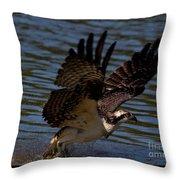 Osprey Catching A Fish Throw Pillow