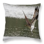 Osprey Dive Throw Pillow