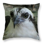 Osprey Portrait Throw Pillow