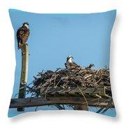 Osprey Family 8283 Throw Pillow