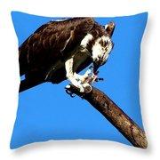 Osprey Feeding 014 Throw Pillow