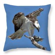 Osprey Feeding On A Fish Throw Pillow