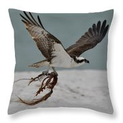 Osprey Flying With Seaweed Throw Pillow