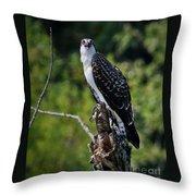 Osprey Gaze Throw Pillow
