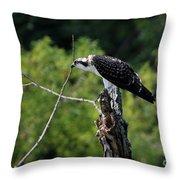 Osprey Gaze II Throw Pillow