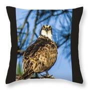 Osprey Head Turn Throw Pillow