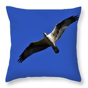 Osprey Hunting Throw Pillow
