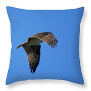 Osprey In Flight 3 Throw Pillow