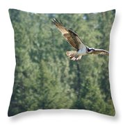 Osprey In Flight 6 Throw Pillow