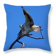 Osprey In Flight Throw Pillow