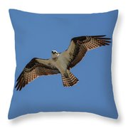 Osprey In Flight Pickwick Dam Tennessee 031620161594 Throw Pillow