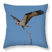 Osprey In Flight With Stick For Nest 031620160877 Throw Pillow