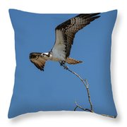 Osprey In Flight With Stick For Nest 031620160906 Throw Pillow